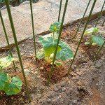 家庭菜園 藁をよじってきゅうりネットを作りました