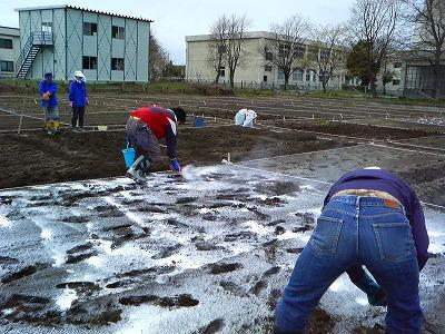 消石灰で土を消毒