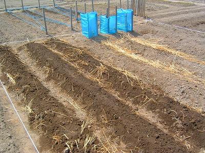 畑 水撒き