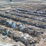 農地開拓 2回目 牛糞で土に栄養を与える