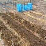 農地開拓 水撒き作業