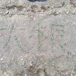 二十日大根文字アートの下地の芽がばっちり完成!