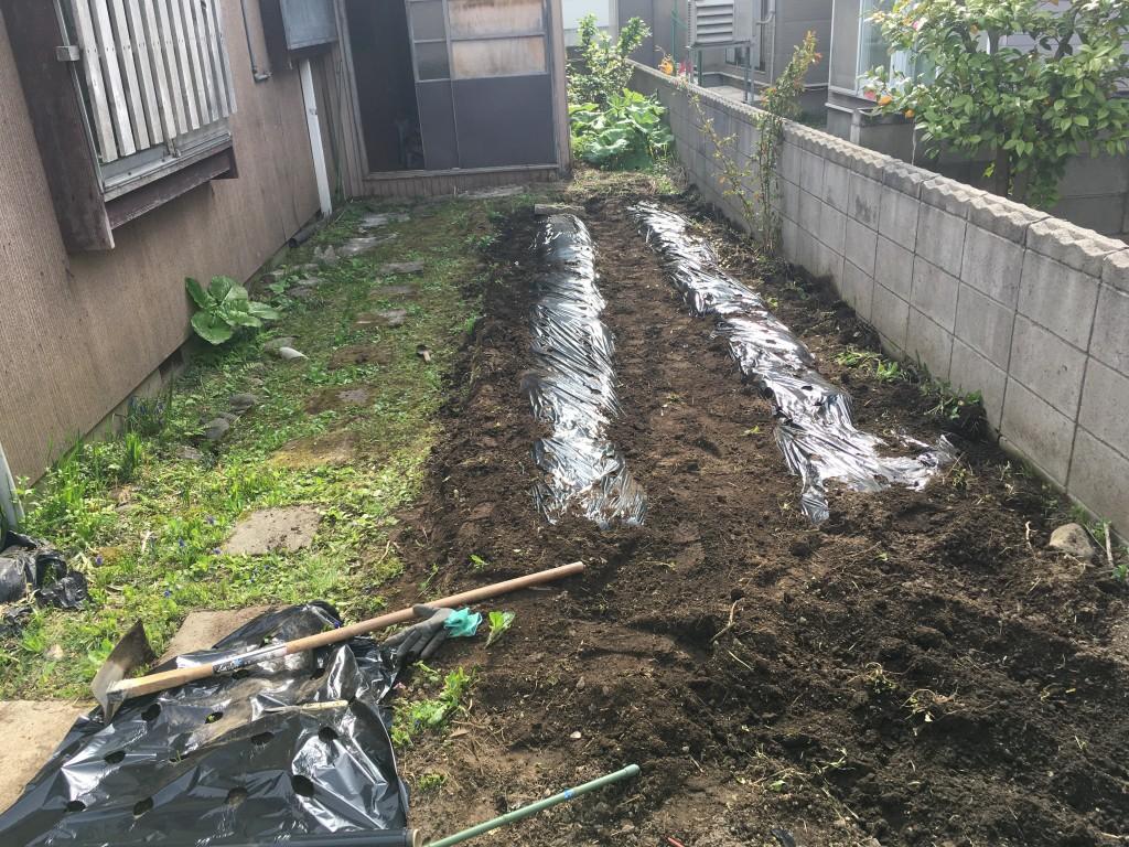 えだまめ用 雑草対策と土の保温にマルチを敷いた
