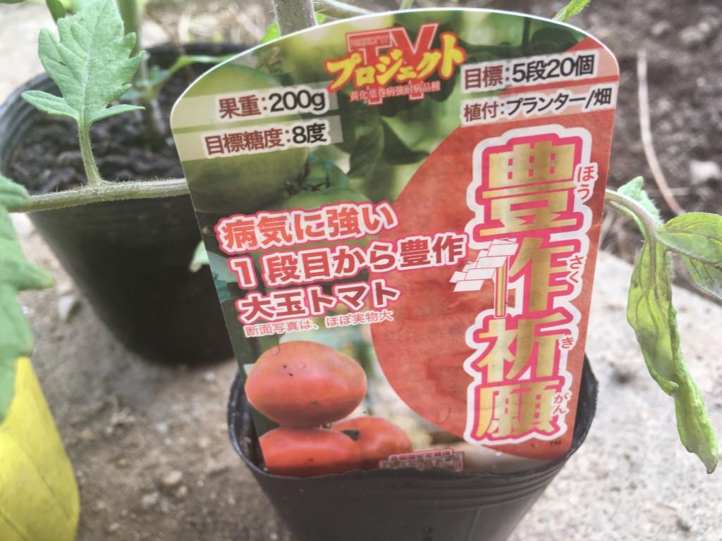 トマト3苗(1つは豊作祈願という品種であとわからん)