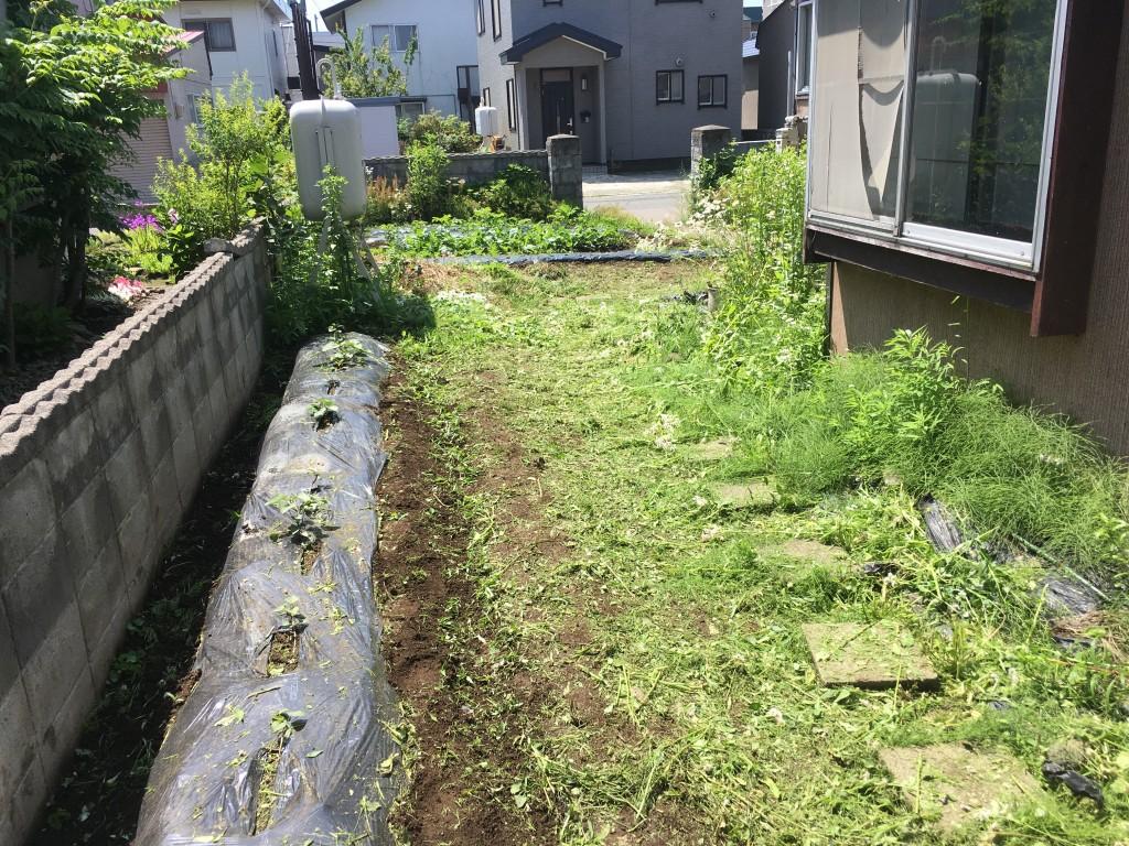 雑草を刈ったぜ