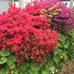 我が家の5月の花の饗宴が豪華絢爛