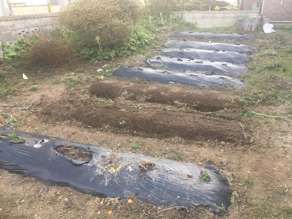 家庭菜園2018始動 畑の様子