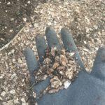 たい肥のかわりにホタテ残渣(貝肉、汚泥等)を使ってみる